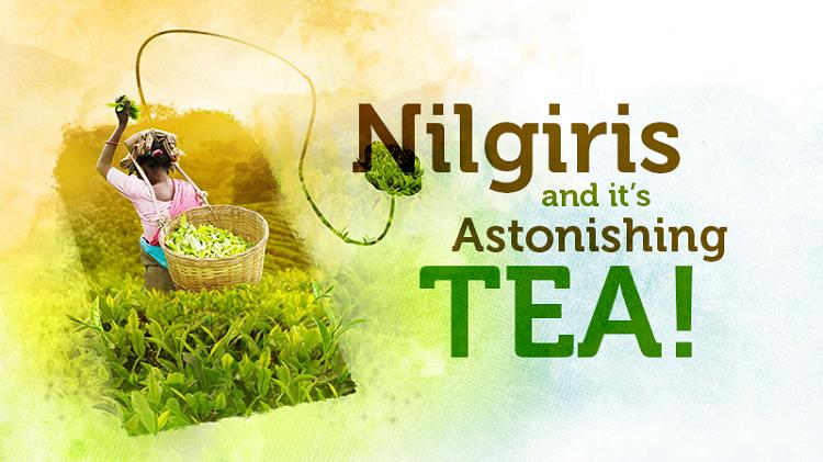 $600 per kilogram for tea?! – Nilgiris and it's astonishing TEA!