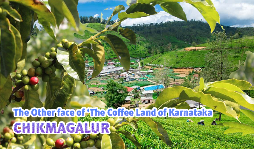 The Other face of 'The Coffee Land of Karnataka'- Chikmagalur
