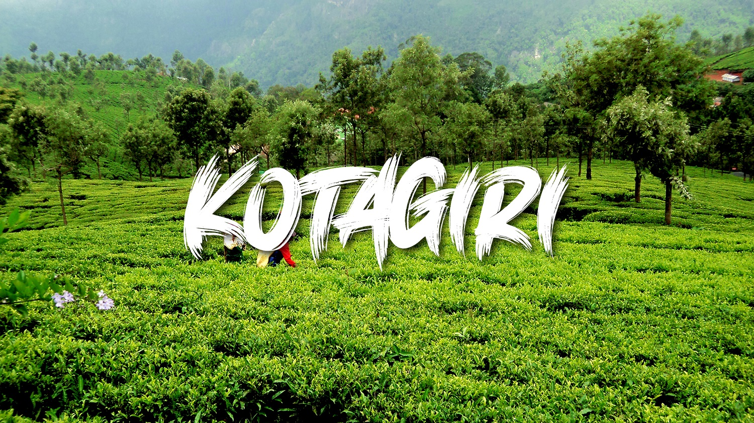 Reserve Your Gifted Quota for Living in Kotagiri!