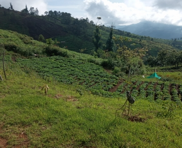2400 sq.ft. Residential Plot For Sale in Thandikudi Kodaikanal