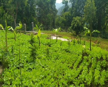 23 cents Residential Plot For Sale in Kombaikadu Kodaikanal