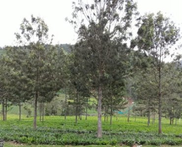 3 acres Agriculture Land For Sale in Milidhane Kotagiri