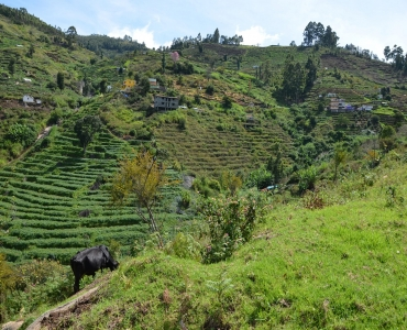 Buy, Sell Properties in Kodaikanal, Ooty & South Indian Hill Stations - Hills & Wills