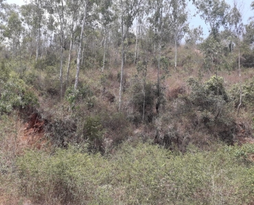 50 cents Residential Plot For Sale in Arapuleeswarar Temple Main Road Kolli Hills