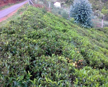 3000 sq.ft. Residential Plot For Sale in Pattipadi Yercaud