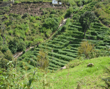 29 cents Agriculture Land For Sale in Attuvampatti Kodaikanal