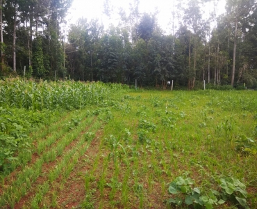 13500 sq.ft. Residential Plot For Sale in Yercaud