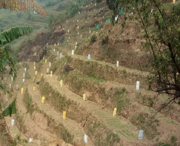 22.96 cents Agriculture Land For Sale in Gundupatti Kodaikanal