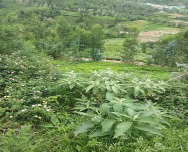 21 cents Agriculture Land For Sale in Ketti Palada Ooty
