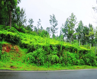 22 cents Residential Plot For Sale in Ooty