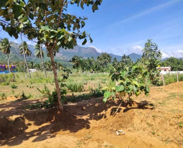 21 cents Residential Plot For Sale in Ramalayam Courtallam