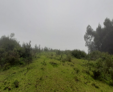 7 acres Agriculture Land For Sale in Kundupatti Kodaikanal