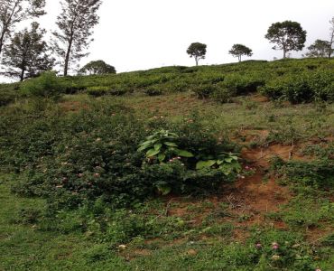 1.5 acres Agriculture Land For Sale in Bengalmattam Ooty
