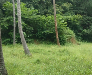 1200 sq.ft. Commercial Land  For Sale in Courtallam