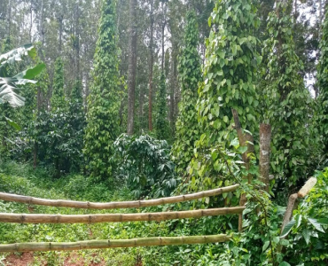 10.5 acres Agriculture Land For Sale in Napoklu Coorg