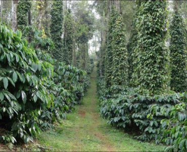 165 acres Agriculture Land For Sale in Thandikudi Kodaikanal