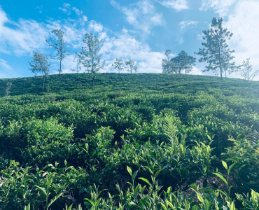9.6 acres Agriculture Land For Sale in Karadipallam Coonoor