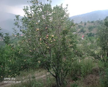 86 acres Agriculture Land For Sale in Kumarsain Shimla