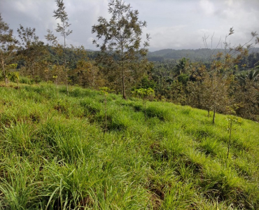 50 cents Residential Plot For Sale in Mananthavady Wayanad