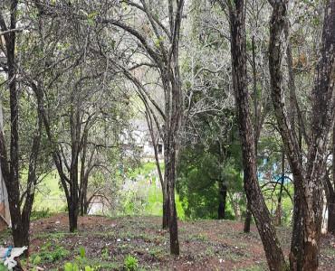 21 cents Residential Plot For Sale in Pambarpuram Kodaikanal