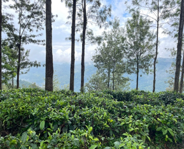 2.5 ares Agriculture Land For Sale in Kotagiri