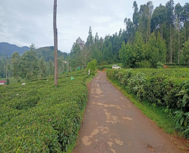 10000 sq.ft. Residential Plot For Sale in Kappachi Ooty