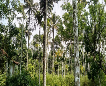 1BHK Farm House For Sale in Wayanad