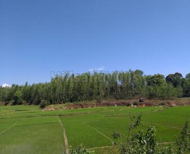 6.98 acres Agriculture Land For Sale in Gundur Nadu Kolli Hills