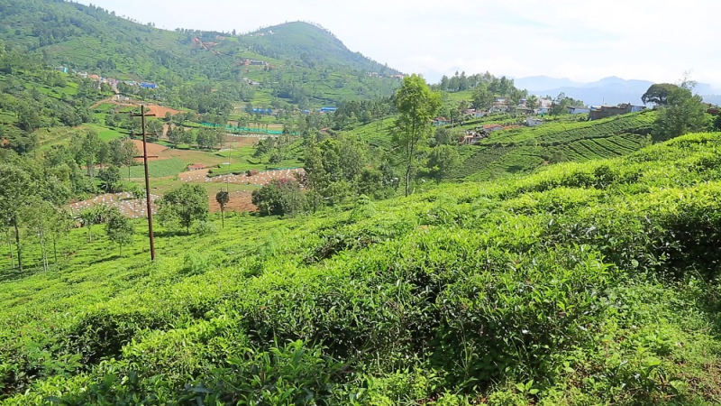 ₹ 35 Lac | 25 cents Residential Plot For Sale in Kethouri, Ooty