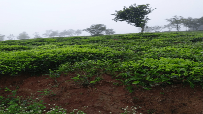 ₹2.80 Cr|174243 sq.ft. Residential Plot For Sale in Coonoor