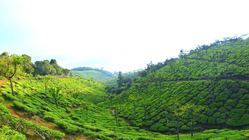 ₹25 Lac|5000 sq.ft. Residential Plot For Sale in Bengalmattam Ooty