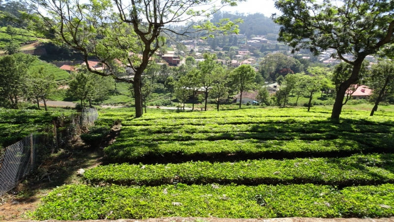 Residential Plot For Sale in Coonoor