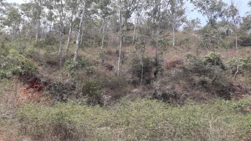 ₹30 Lac|50 cents Residential Plot For Sale in Arapuleeswarar Temple Main Road Kolli Hills