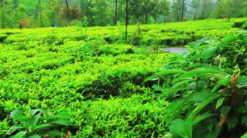 ₹35.20 Lac|22 cents Residential Plot For Sale in Ooty