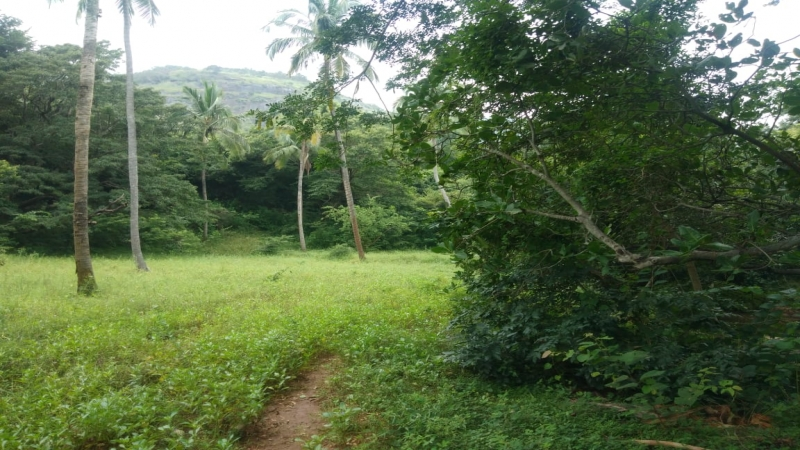 ₹ 1.50 Lac | 1200 sq.ft. Commercial Land  For Sale in Courtallam