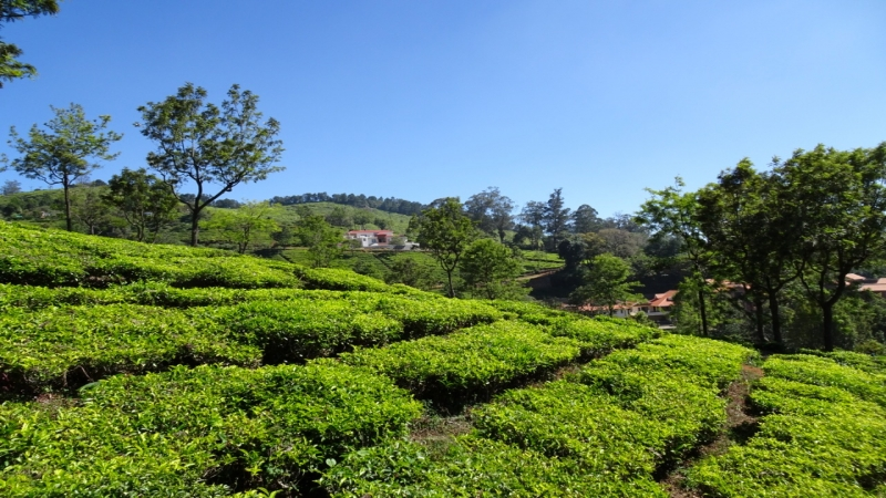 ₹80 Lac | 4800 sq.ft. Residential Plot For Sale in Coonoor