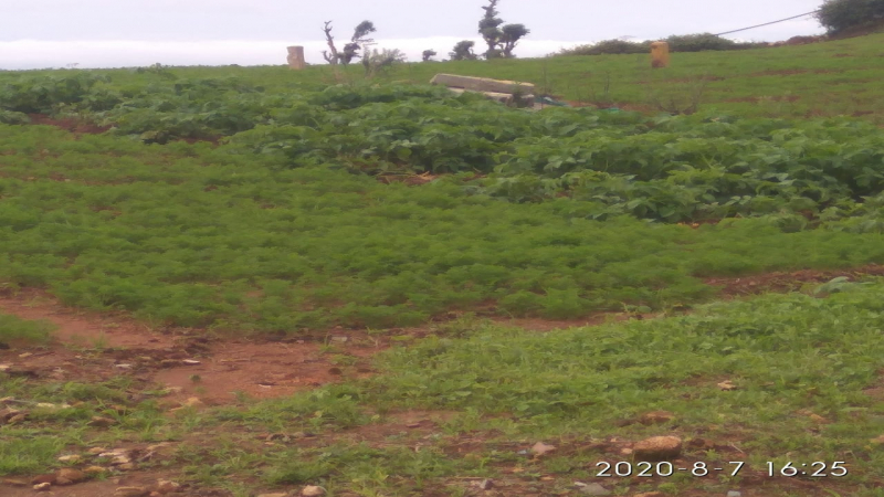 ₹38.25 Lac - 39 Lac   12Cents - 13Cents Residential Plot For Sale in Ooty