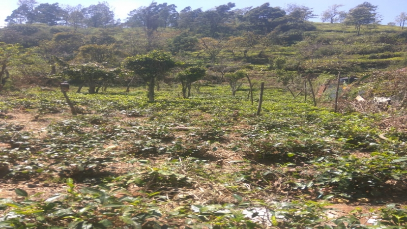 ₹1 Cr|45 cents Agriculture Land For Sale in Coonoor