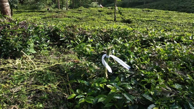 ₹42 Lac | 40 cents Agriculture Land For Sale in Ketti Palada Ooty