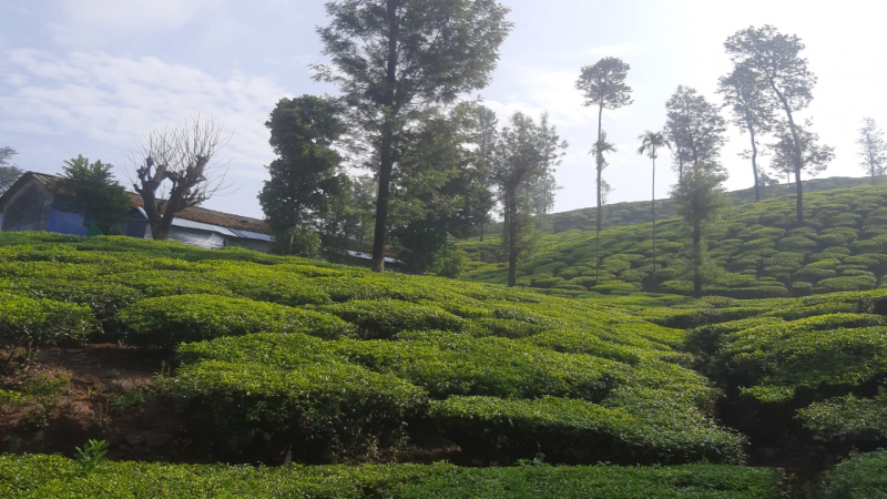 ₹273 Cr|2185 acres Agriculture Land For Sale in Valparai