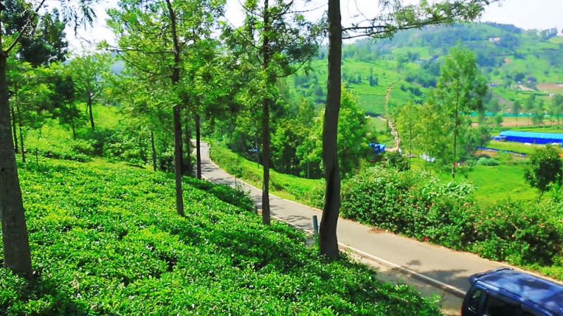 ₹60 Lac | 30 cents Residential Plot For Sale in Kethouri Village Ooty