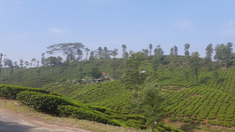2185 acres Agriculture Land For Sale in Valparai