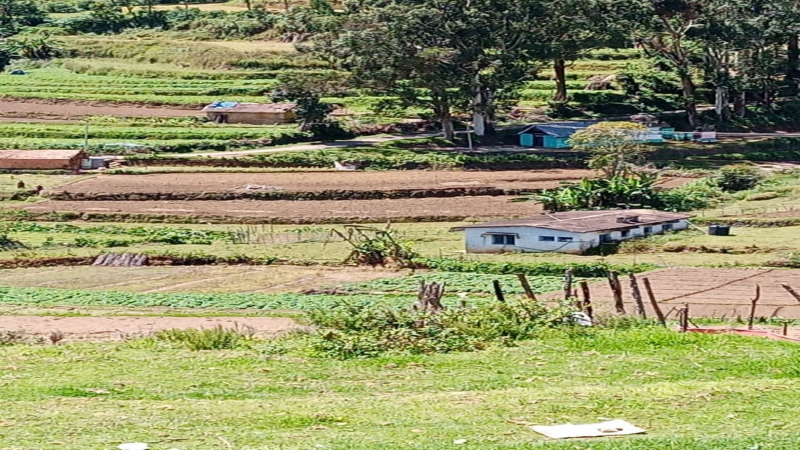21 cents Agriculture Land For Sale in Kodaikanal