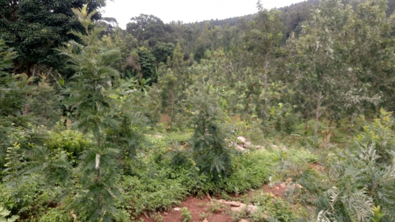 ₹1 Cr | 2.2 acres Agriculture Land For Sale in Kolli Hills
