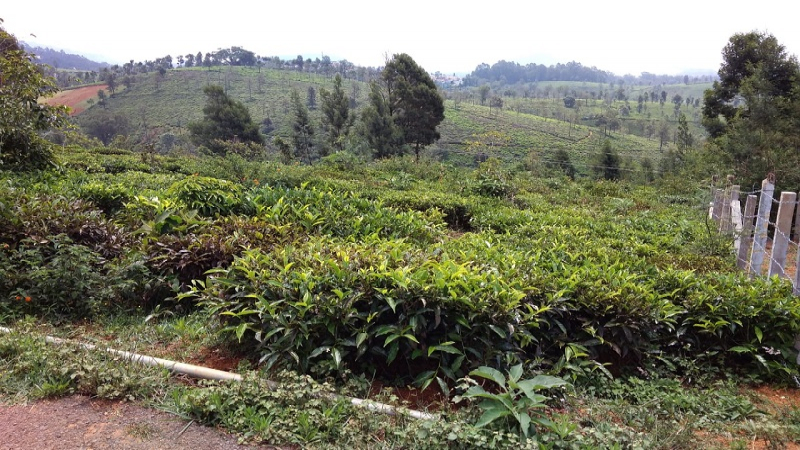 ₹57.50 Lac 23 cents Residential Plot For Sale in Hubbathalai Coonoor