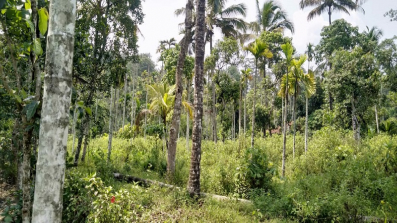 ₹43.75 Lac | 1BHK Farm House For Sale in Wayanad