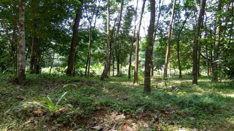 ₹48 Lac|80 cents Commercial Land  For Sale in Koduveli Idukki