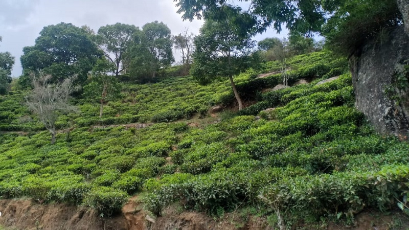 ₹90 Lac|30 cents Agriculture Land For Sale in Aravenu Kotagiri