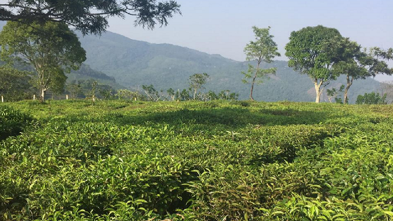 ₹75 Lac 30 cents Residential Plot For Sale in Kotagiri
