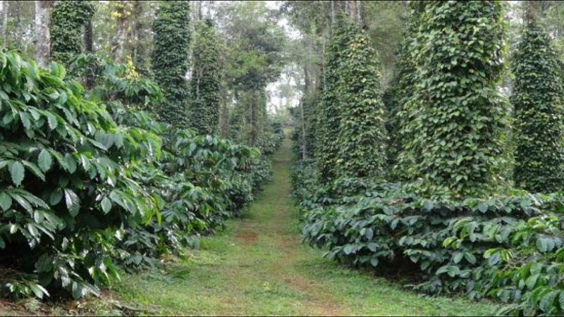 ₹15 Cr|165 acres Agriculture Land For Sale in Thandikudi Kodaikanal